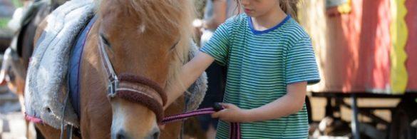 En Kind führt ein braunes Pony.