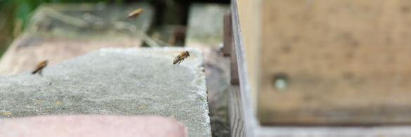 Bienen fliegen in ihren Kasten