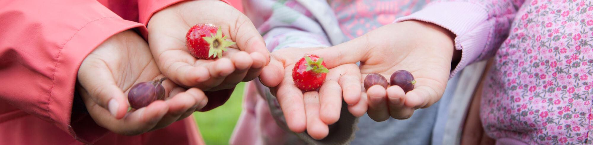 Erdbeeren in Kinderhände